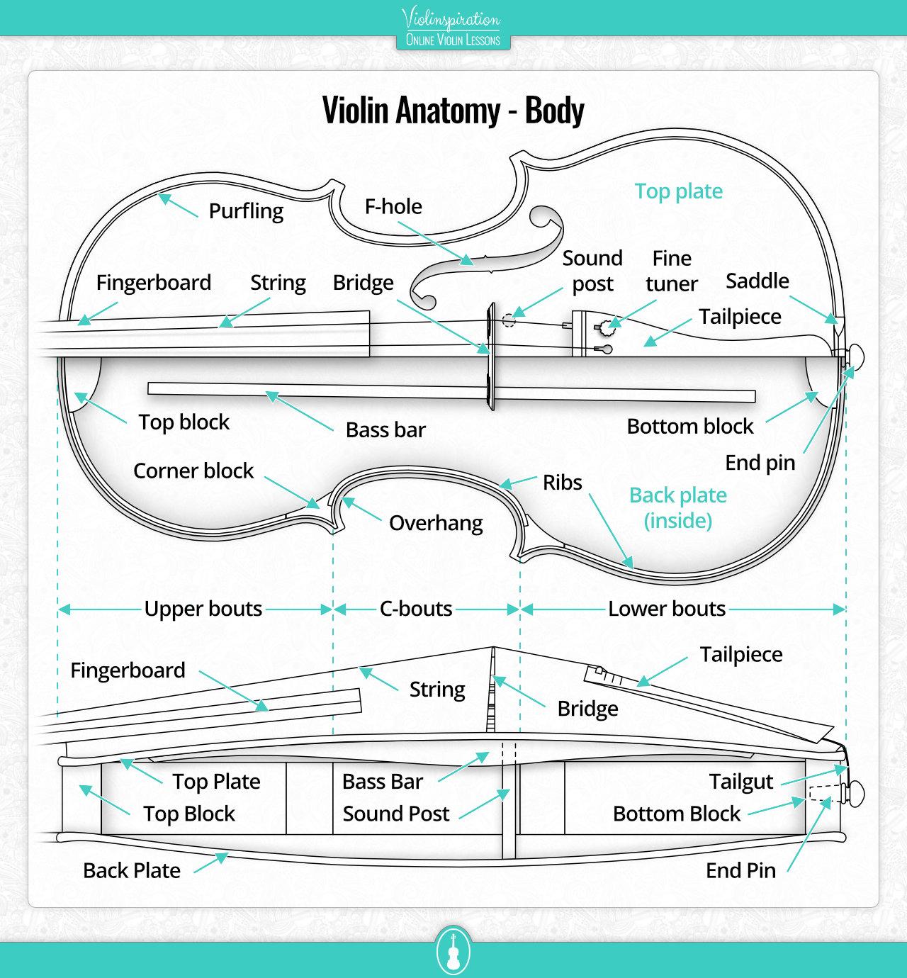 Violin Anatomy - Body