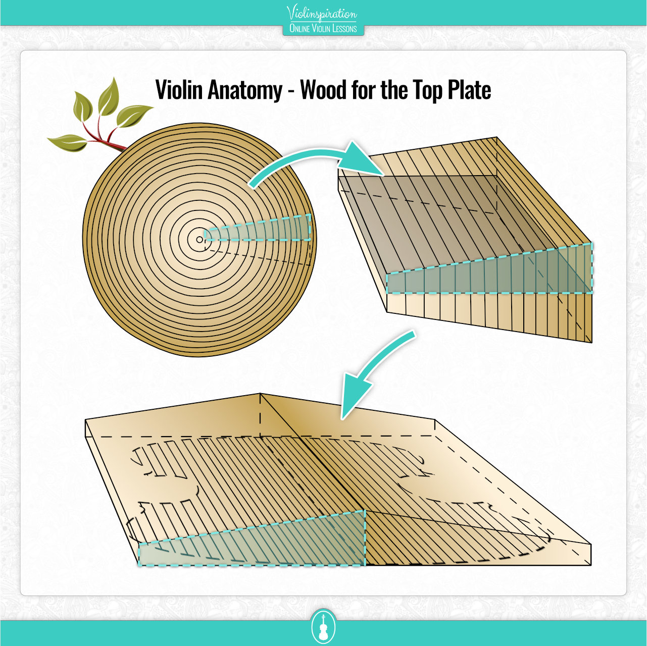Violin Anatomy - Wood for the Top Plate
