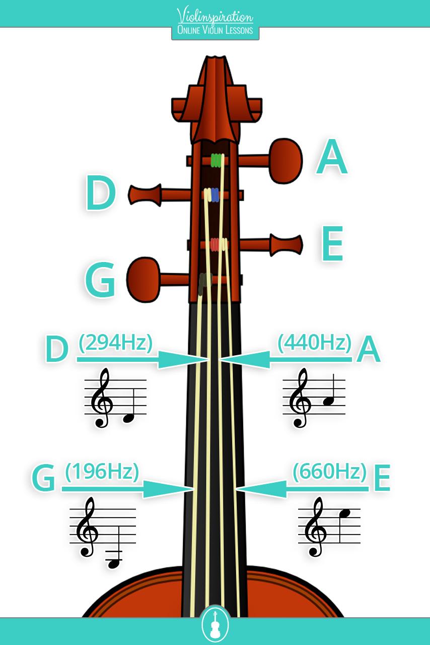 Violin-strings-pegs